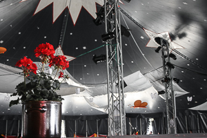 Circus tent and red flower